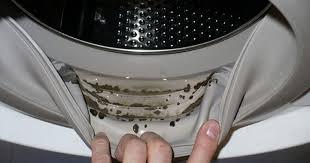 cum curat masina de spalat